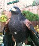 Bird control Hertfordshire