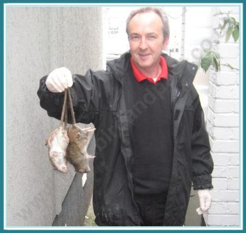 Rat control Hertford Enfield Watford North London